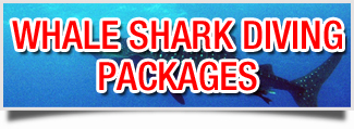 Whale Shark Diving Packages